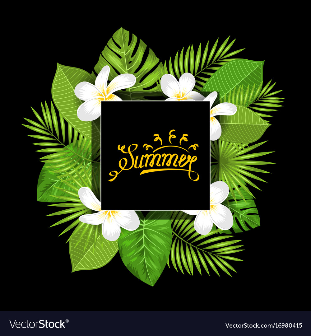 Summer card with frangipani flowers and green vector image