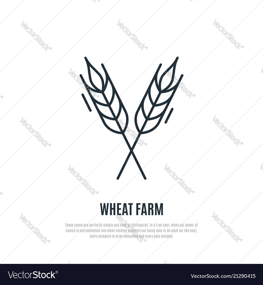 Wheat spikelets line icon wheat farm symbol
