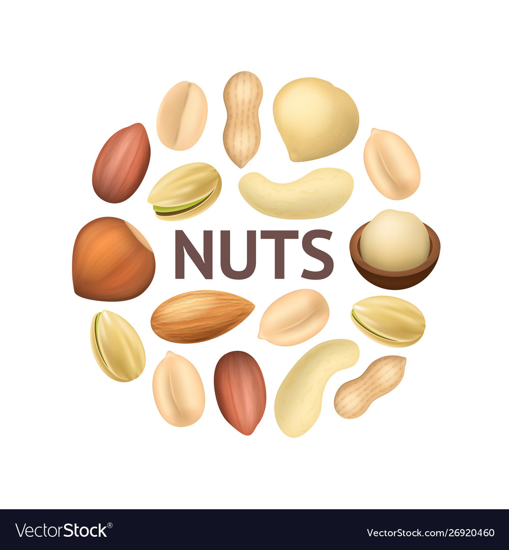 Realistic detailed 3d different types nuts round vector image