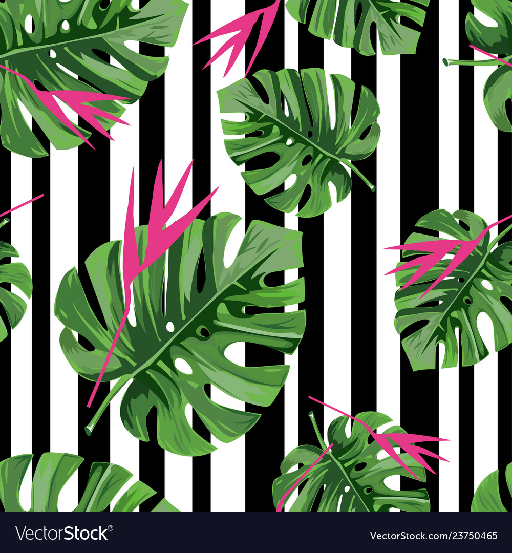 Exotic jungle plant tropical palm leaves with pink