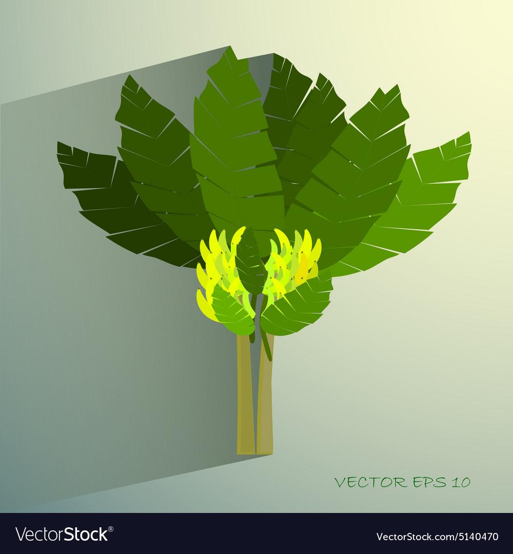 Ecological Concept A Beautiful Tropical Banana