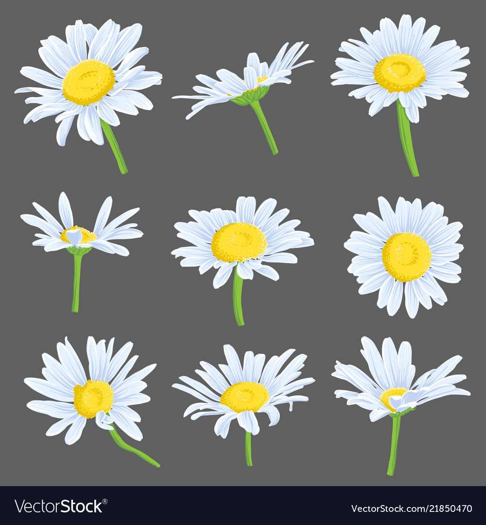 Set Of Drawing Daisy Flowers Royalty Free Vector Image