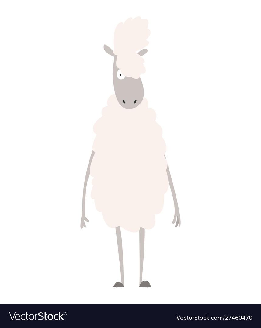 Sheep a domestic animal