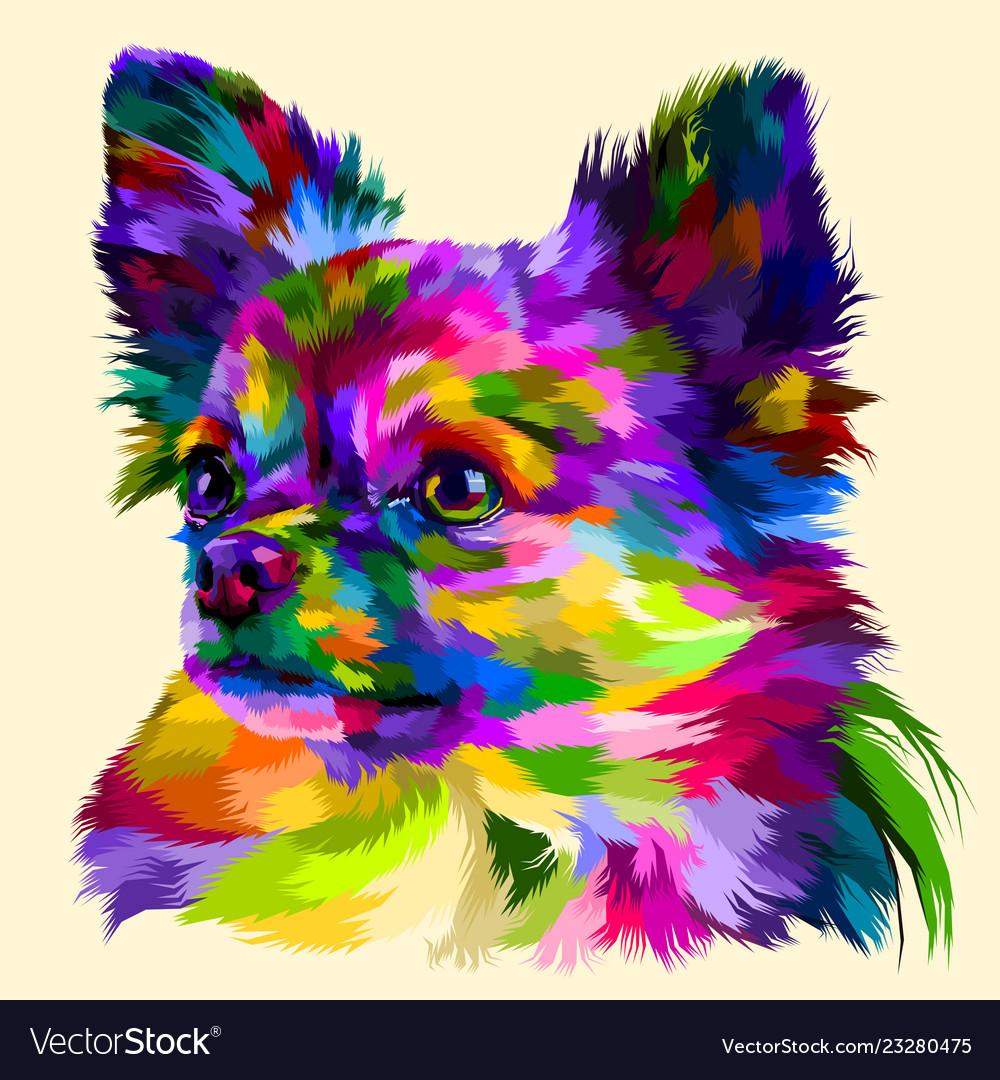 Colorful head chihuahua