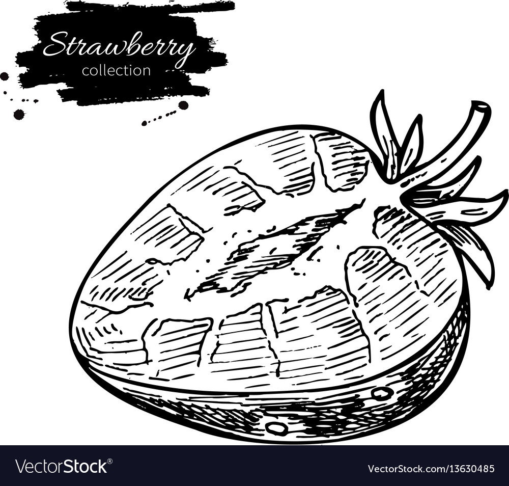 Strawberry drawing isolated hand drawn