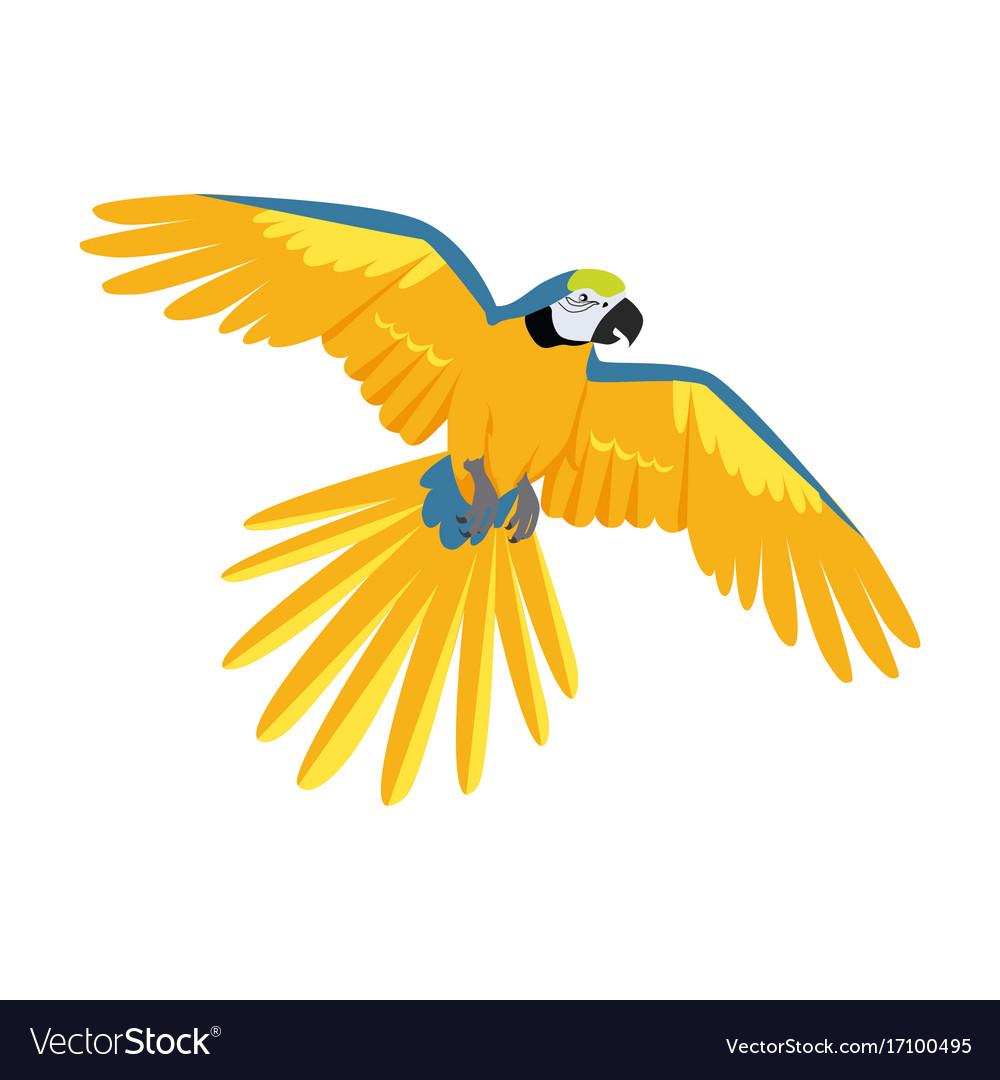 Flying ara parrot flat design vector image