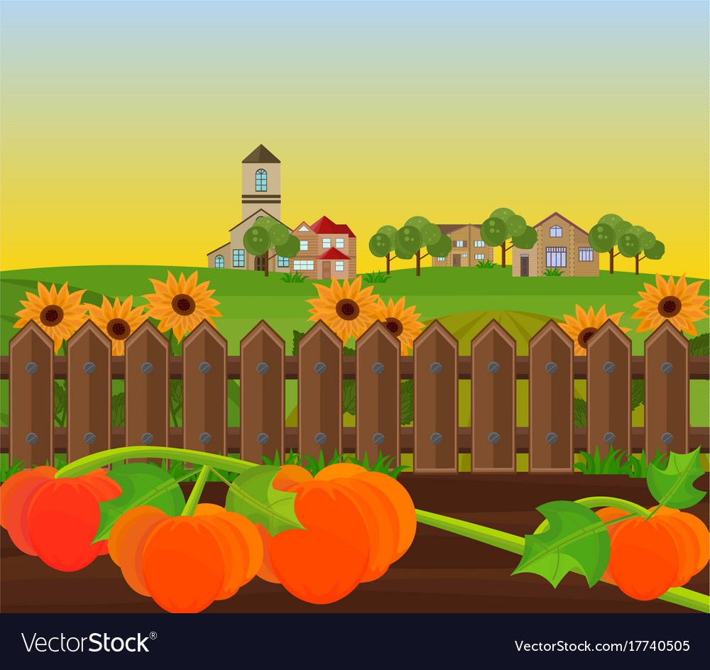 Pumpkin harvest garden background