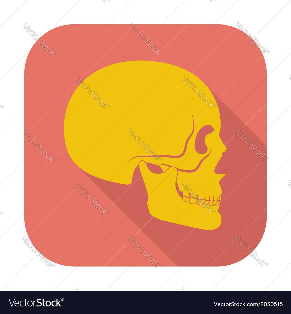 Anotomy skull