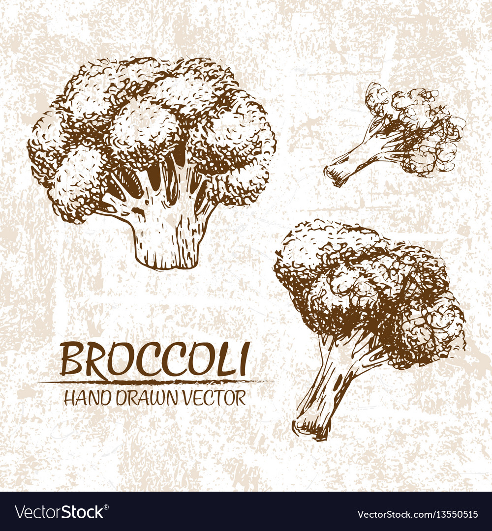 Digital broccoli hand drawn