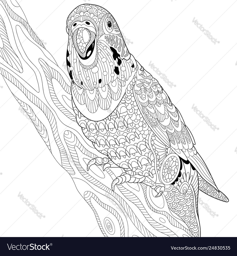 Budgie parrot adult coloring page