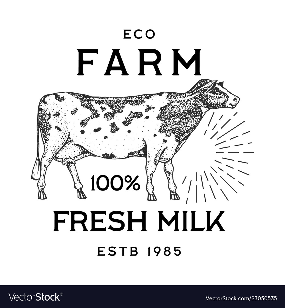 Farm cattle bull or cow natural milk and meat