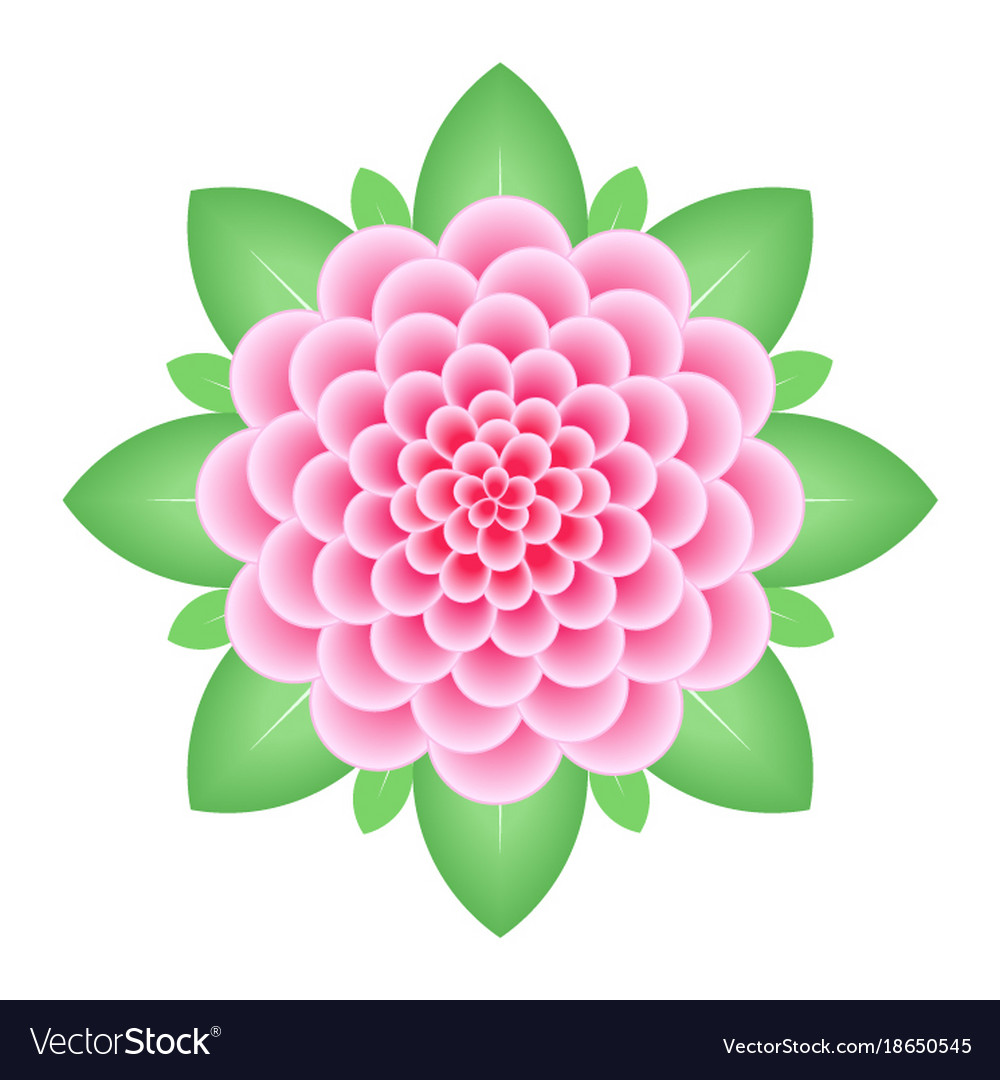 Pink dahlia flower isolated on white background vector image izmirmasajfo
