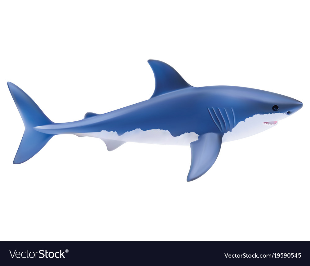 Shark isolated on white realistic 3d vector image