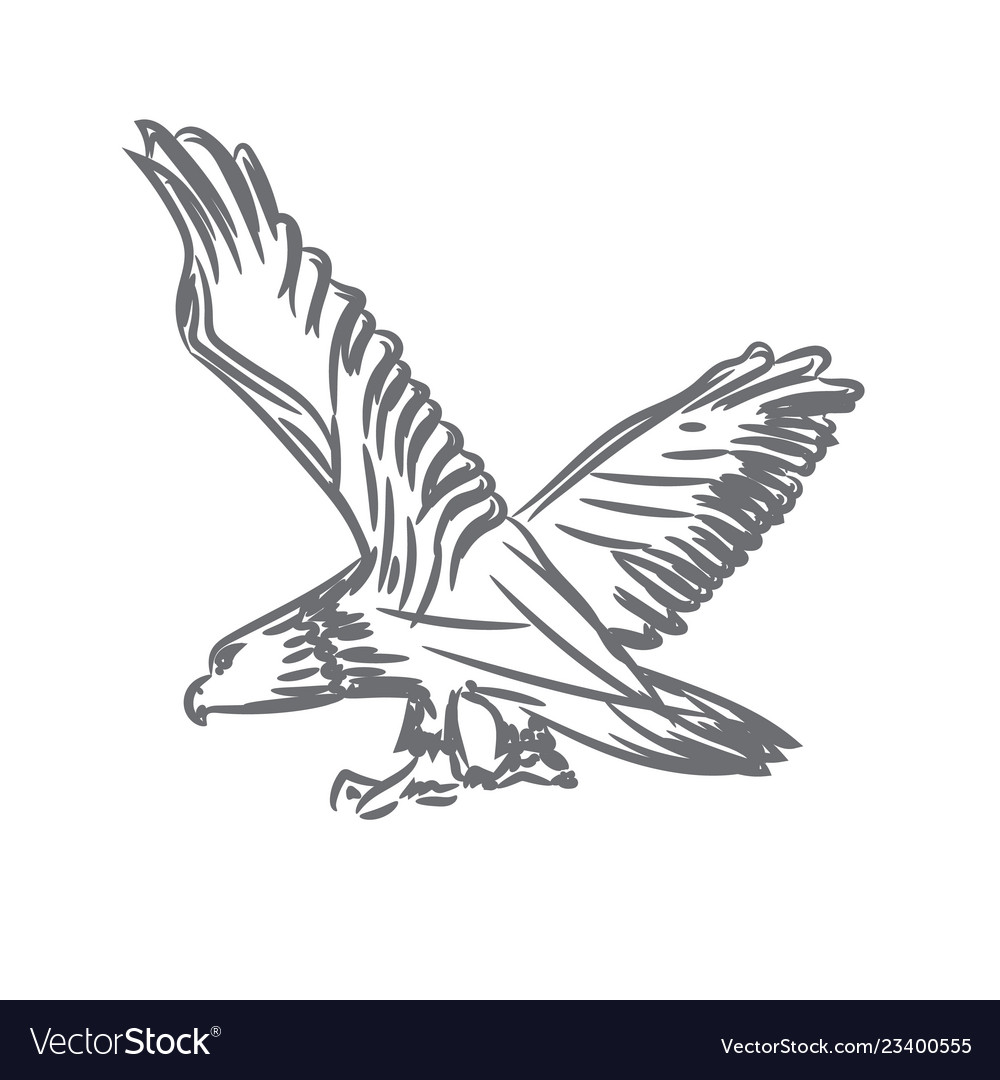 Bald eagle with spreaded wings for symbol or logo