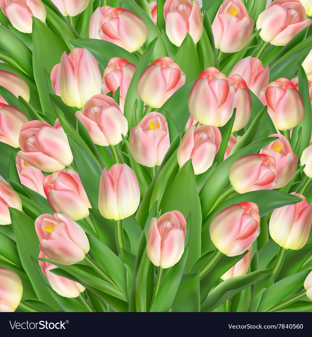 Greeting card with tulips flowers EPS 10