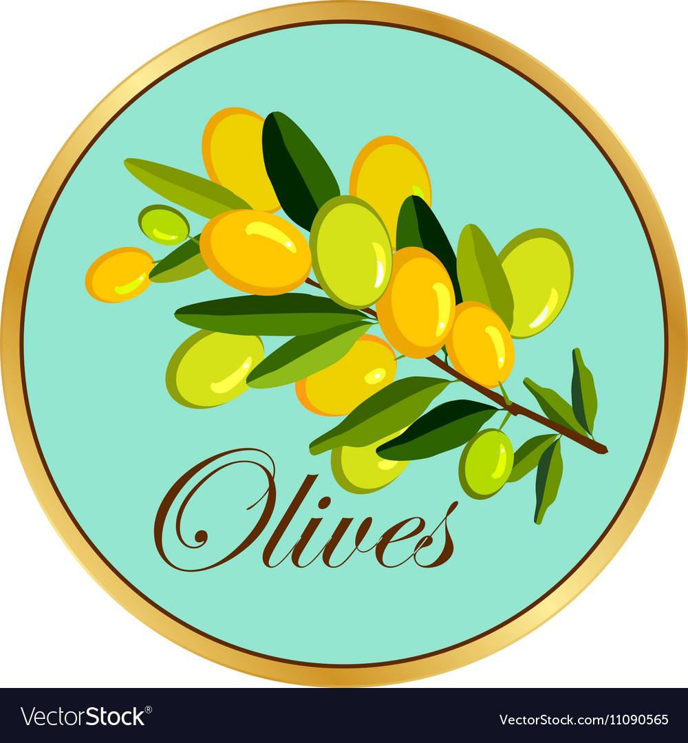 Olive branch badge vector image