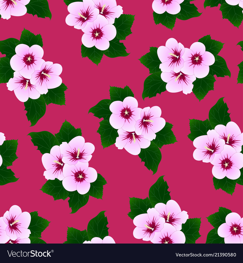 Hibiscus Syriacus Rose Of Sharon On Pink Vector Image