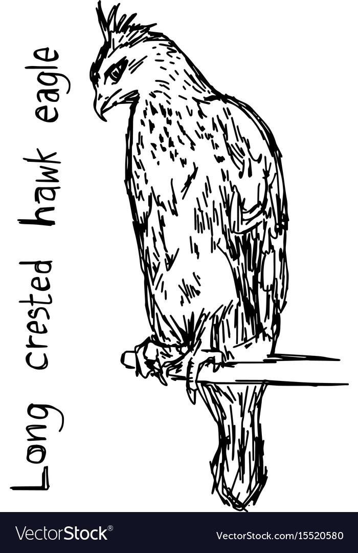 Long-crested eagle bird vector image