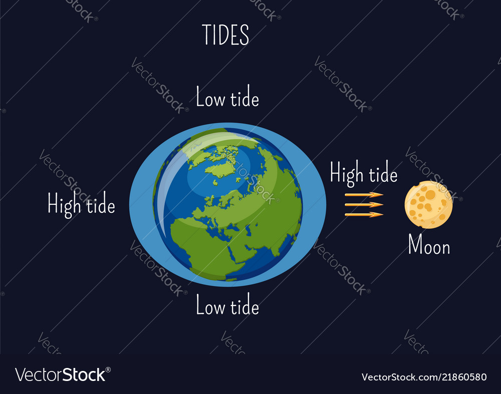 low and high lunar tides diagram effect of moon vector image