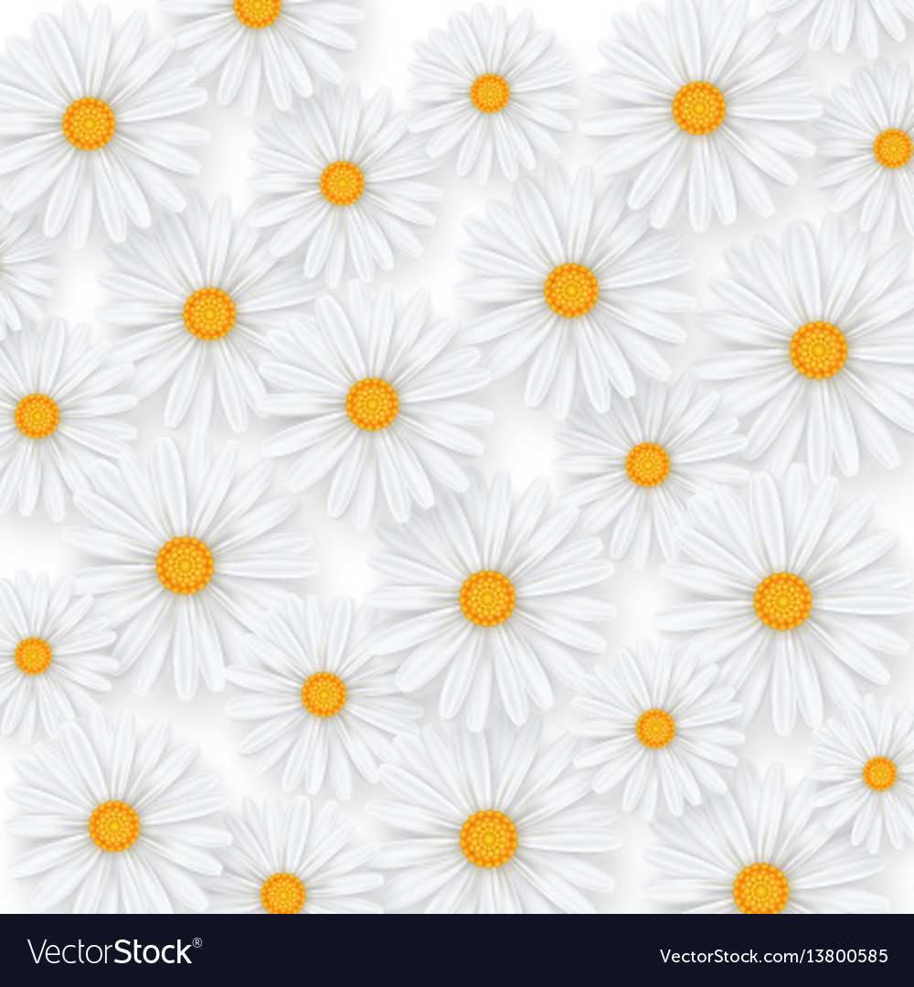 Chamomile summer flower background camomile