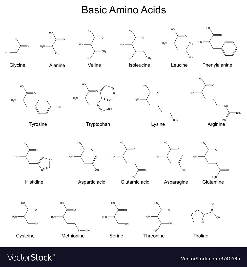 Chemical structures of basic amino acids vector image altavistaventures