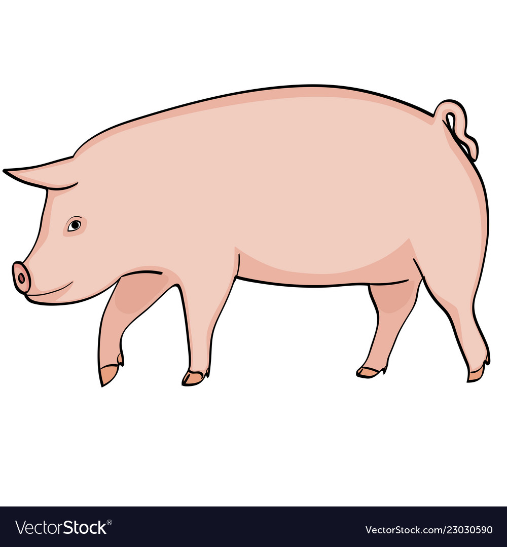 Farm animal boar pink pig on a white background