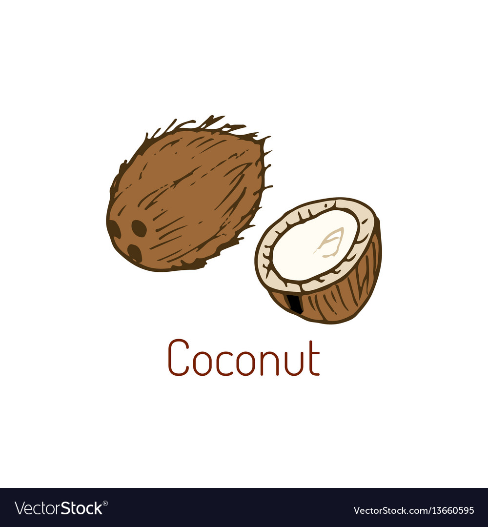 Coconut hand drawn
