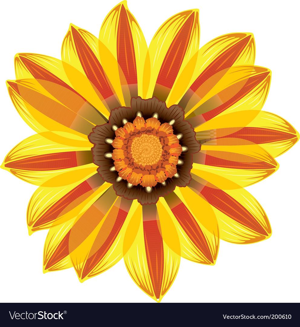 Daisy Flower Royalty Free Vector Image Vectorstock