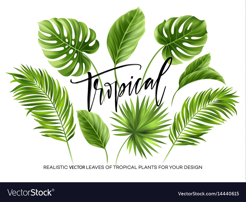 Tropical palm leaves set isolated on white