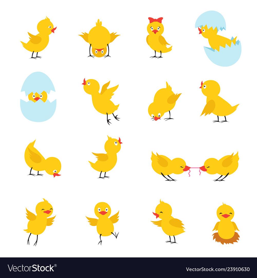 Cute chicks cartoon easter bachickens