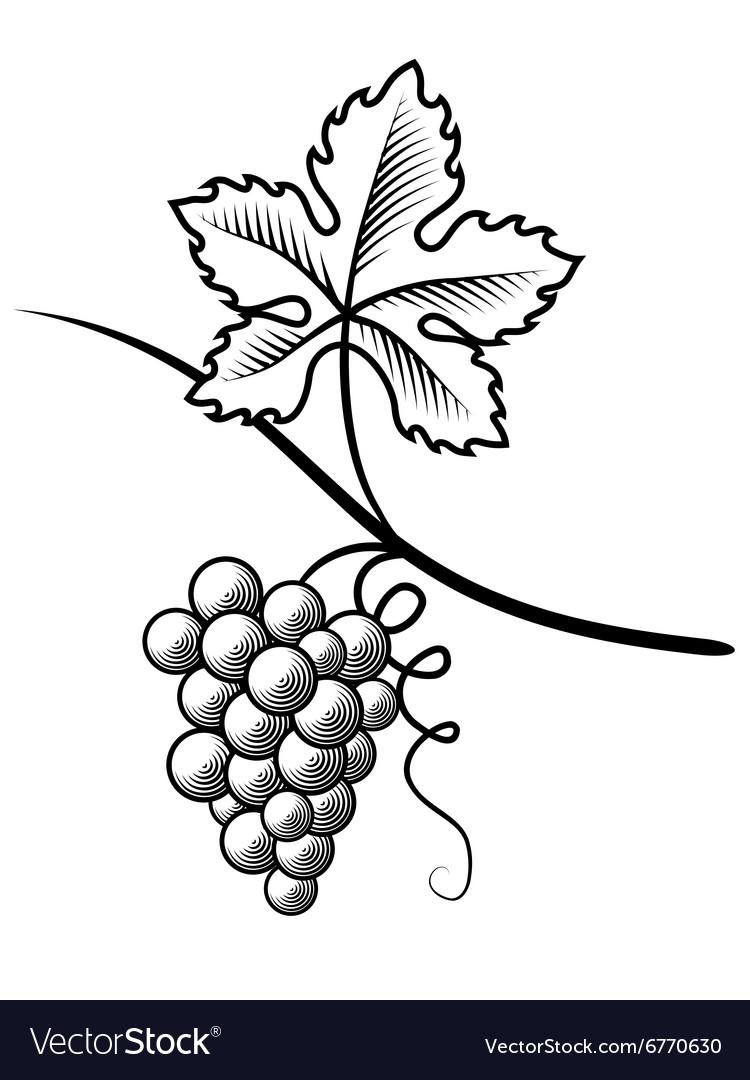 Grapes Imitation engraving vector image