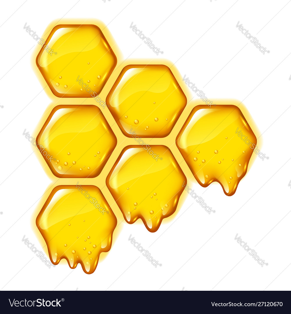 Yellow honeycombs with flowing honey isolated