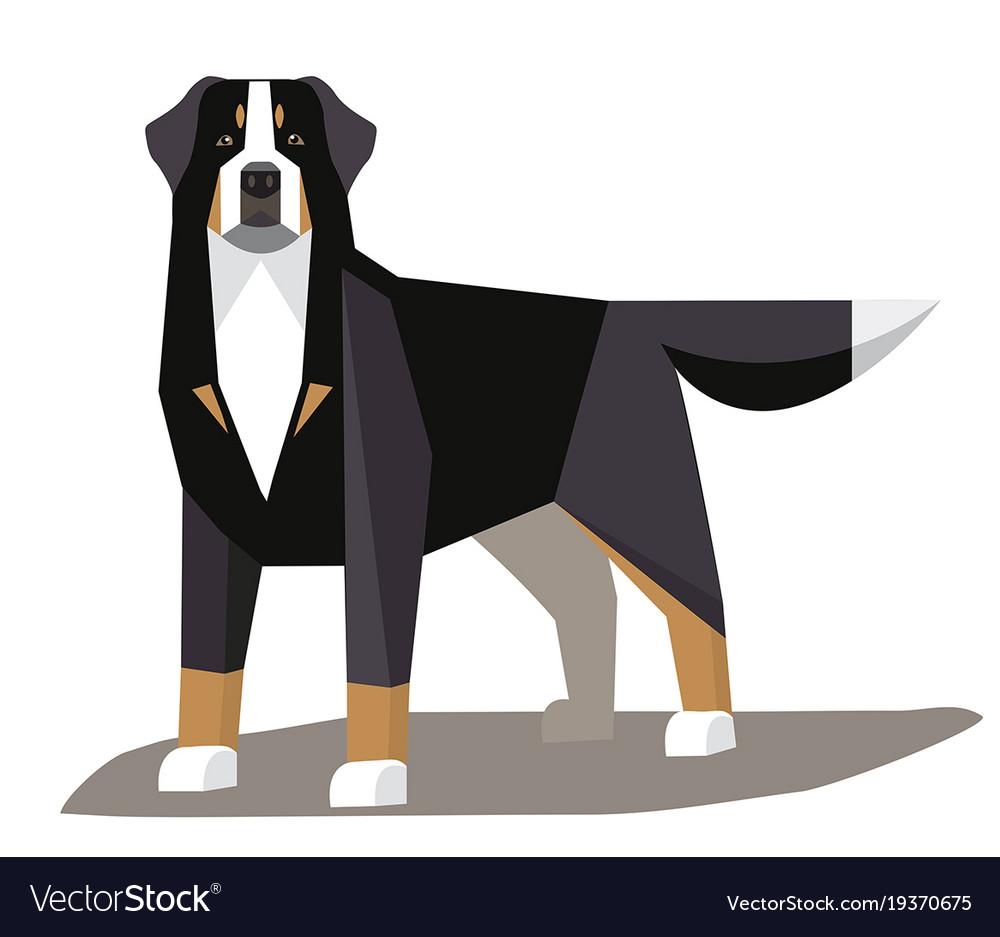Bernese mountain dog minimalist image