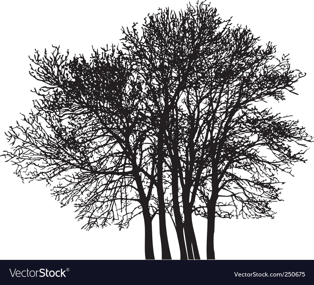 Group tree vector image
