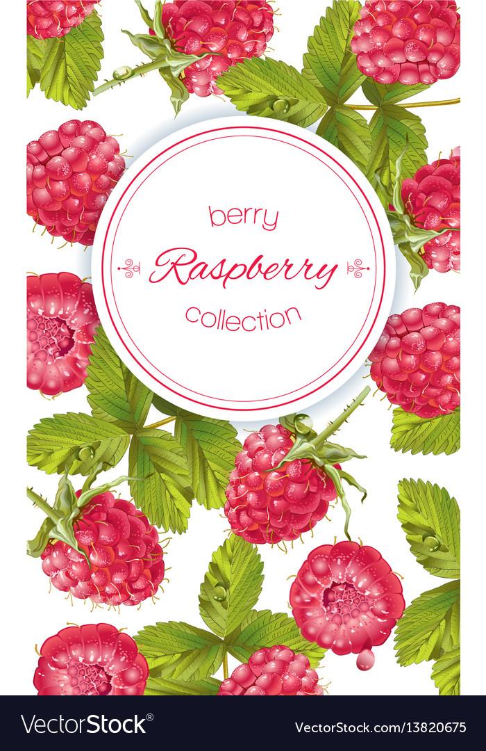 Raspberry vertical banner