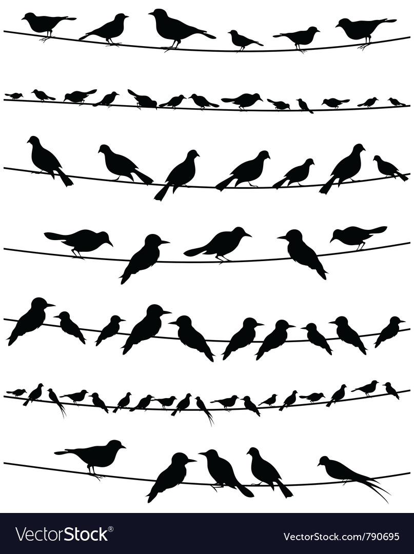 Set of birds on wires