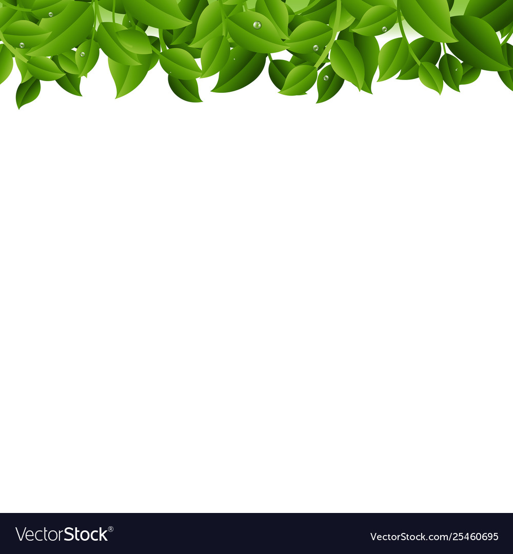 Tree branches isolated white background