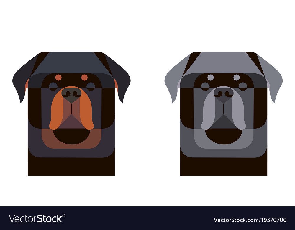 Colored and gray rottweiler portrait in geometric