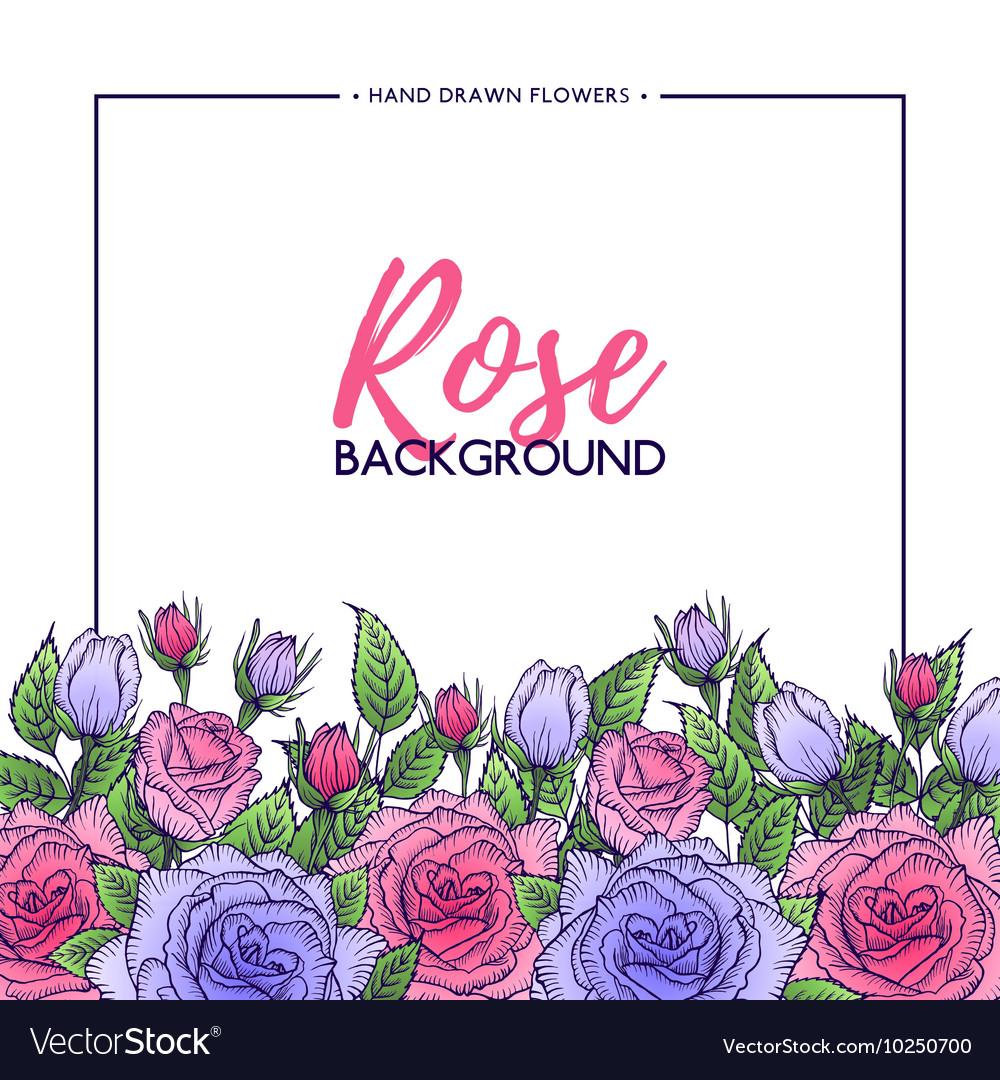 Flower rose background vector image
