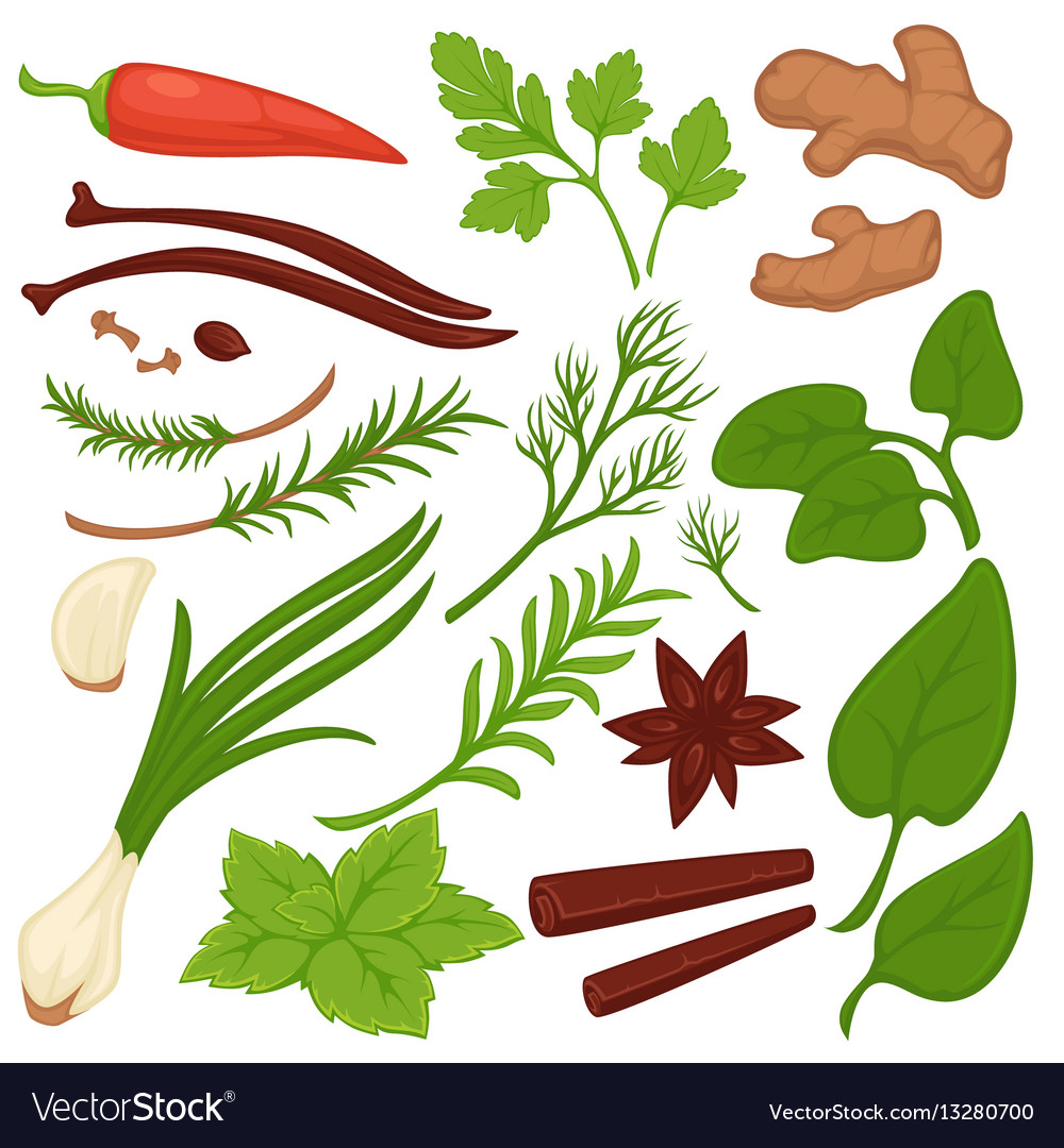Plants and herbs colorful collection on white vector image