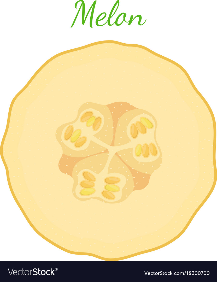Yellow ripe melon cartoon flat style
