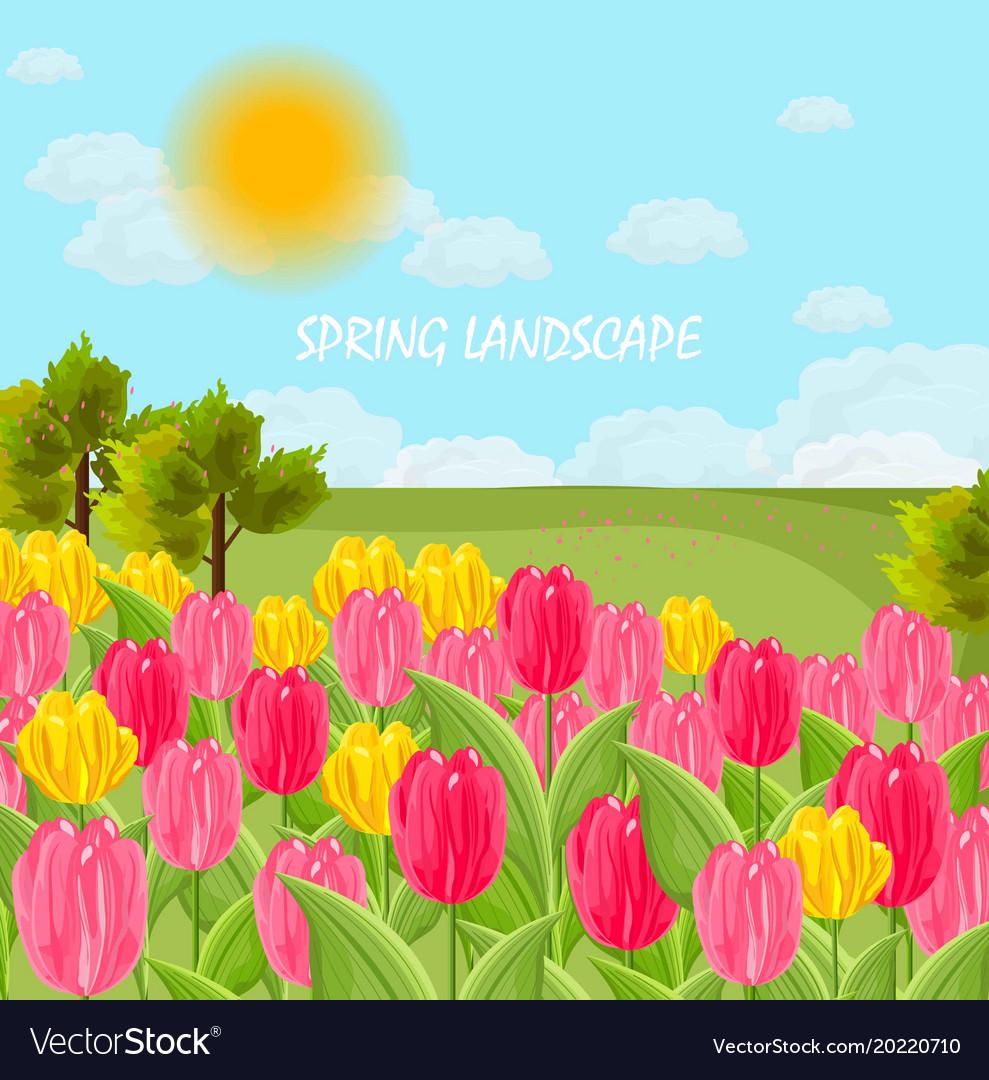 Tulip flowers field sunny day blue sky