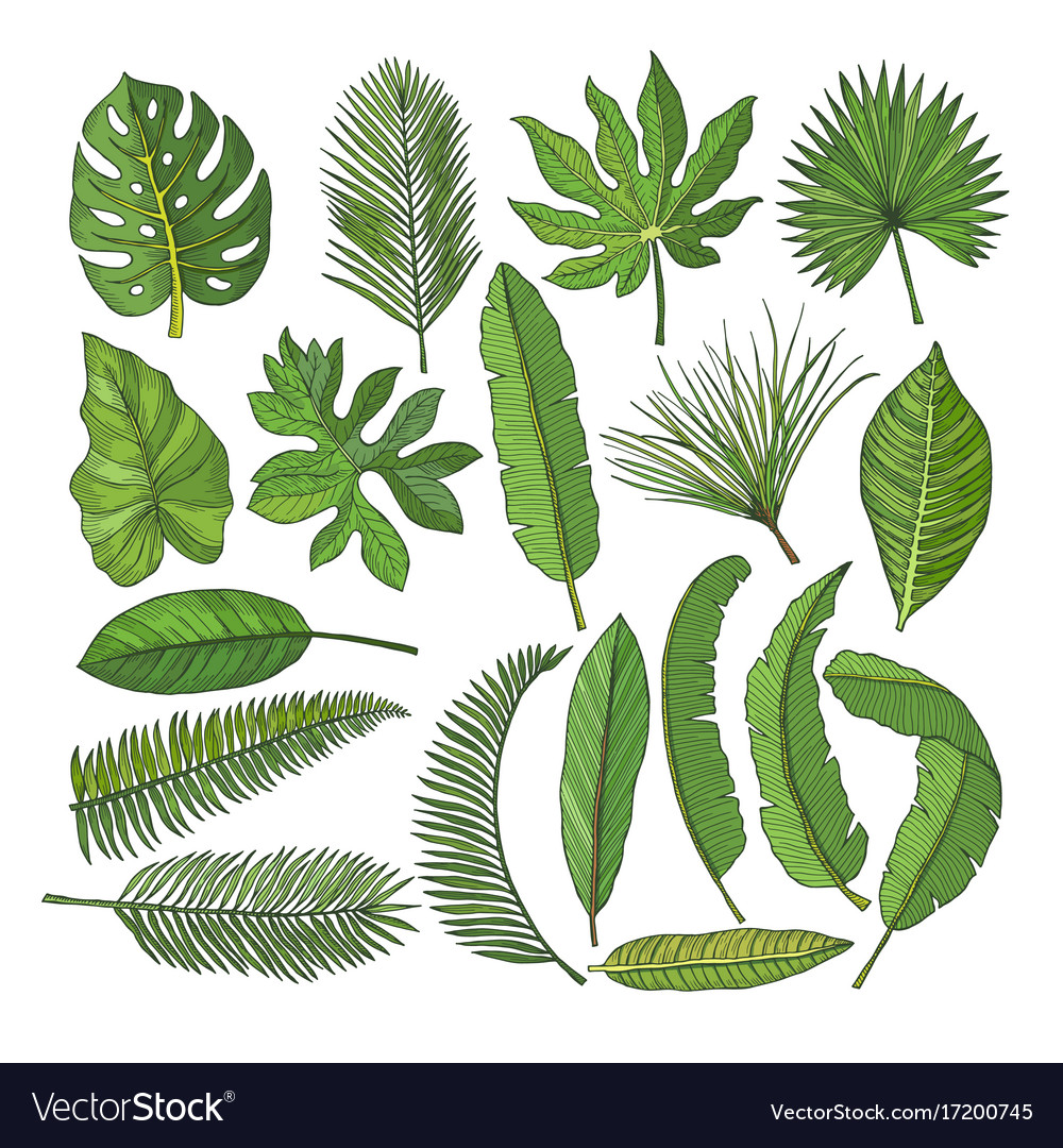 colored pictures set of tropical leaves royalty free vector