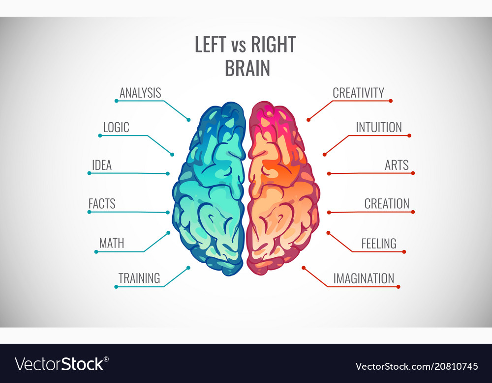 Creative Part And Logic Brain Part Royalty Free Vector Image
