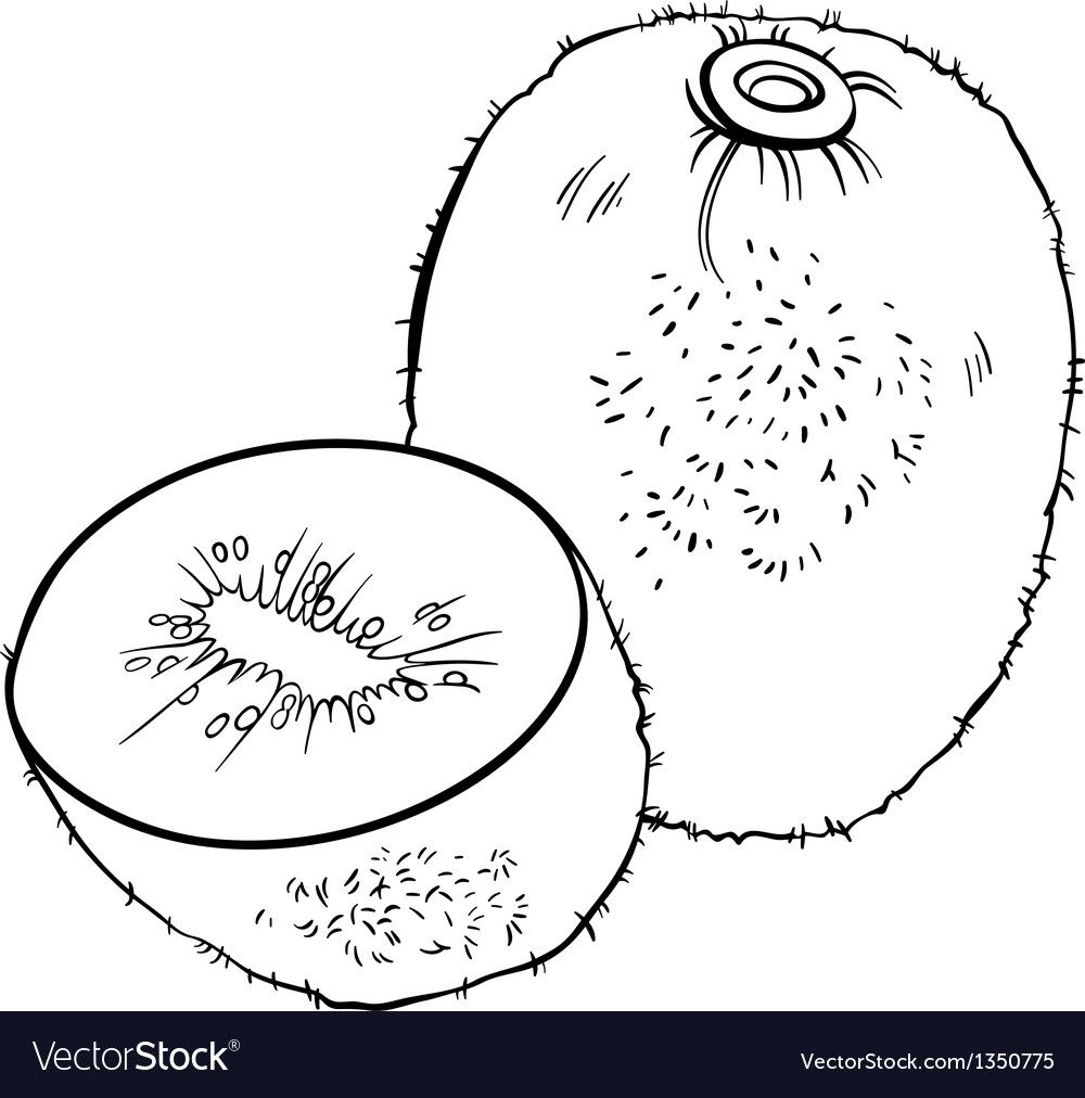 Kiwi Fruit For Coloring Book Vector Image