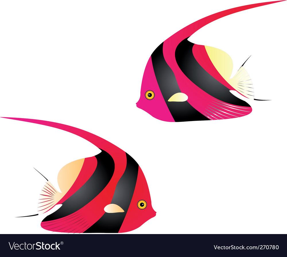 Angelfish vector image