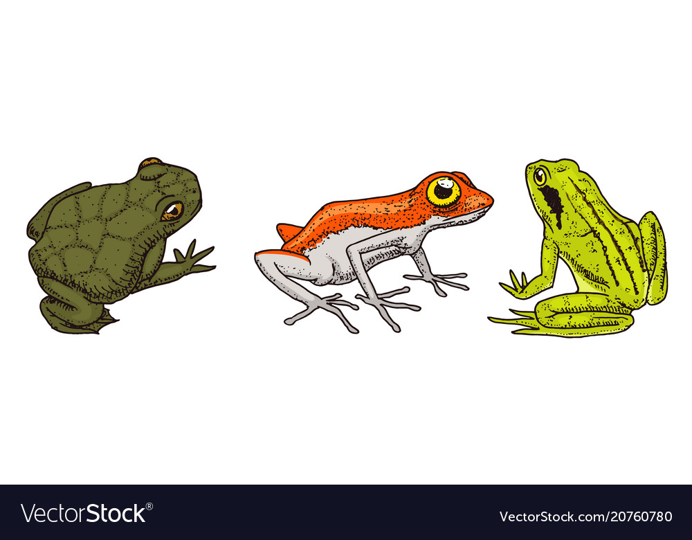 Tropical amphibians wild animals frogs and