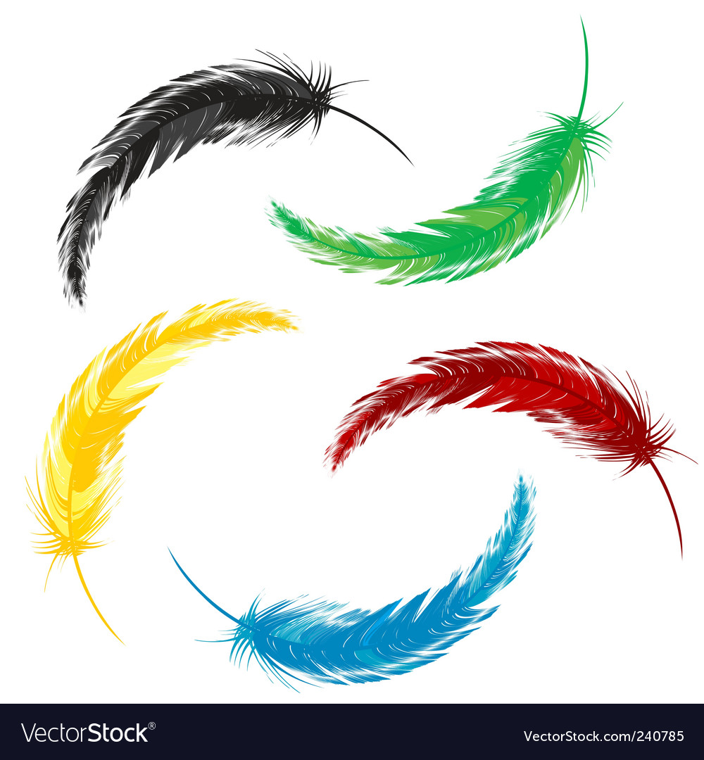 Set of colored feathers vector image