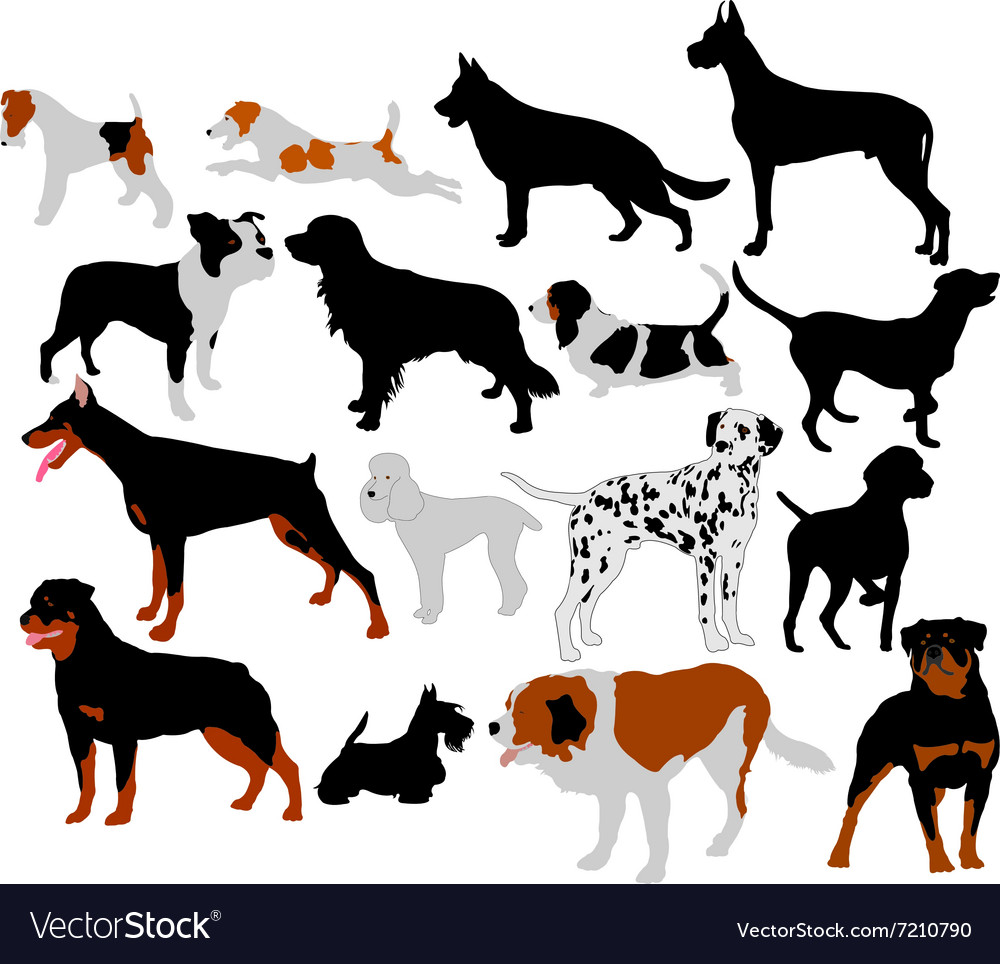 Dogs vs vector image