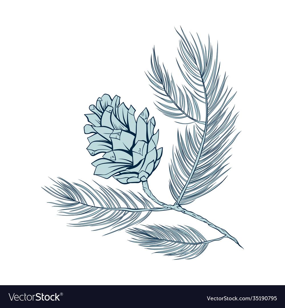 Fir cone pine tree branch spruce line art